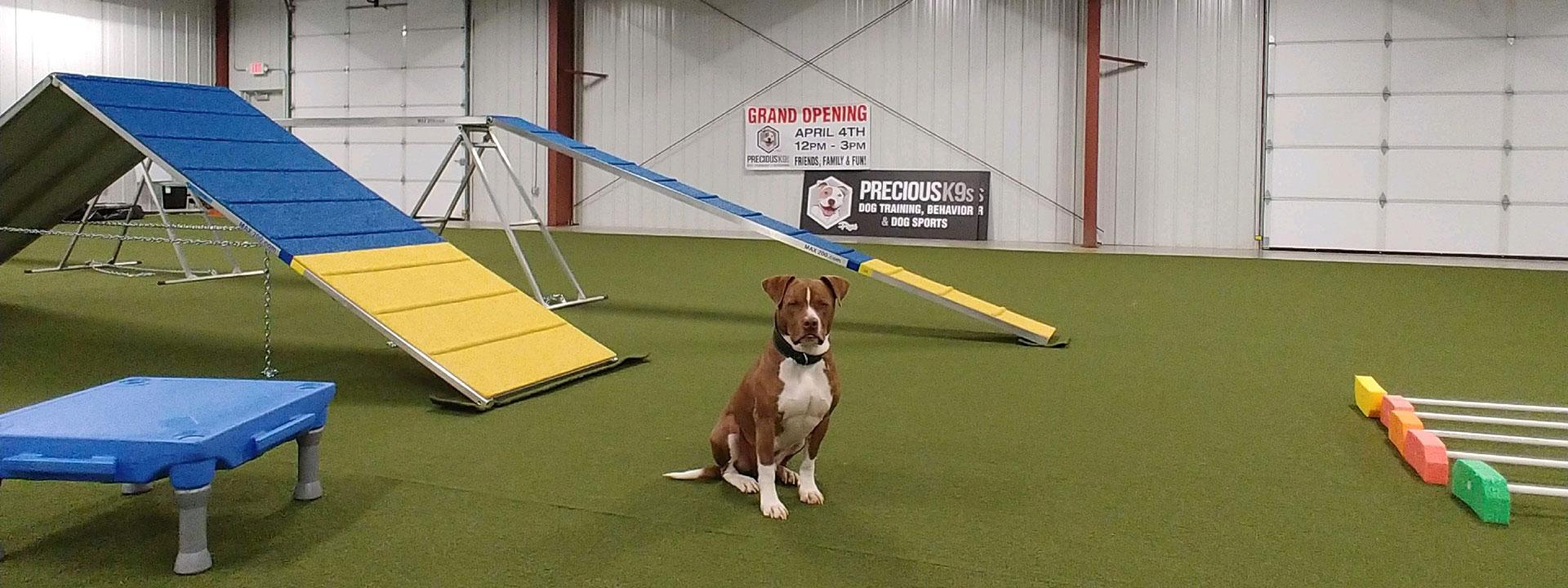 Precious K9s - Dog Training, Dog Behavior, Springfield, Missouri areana