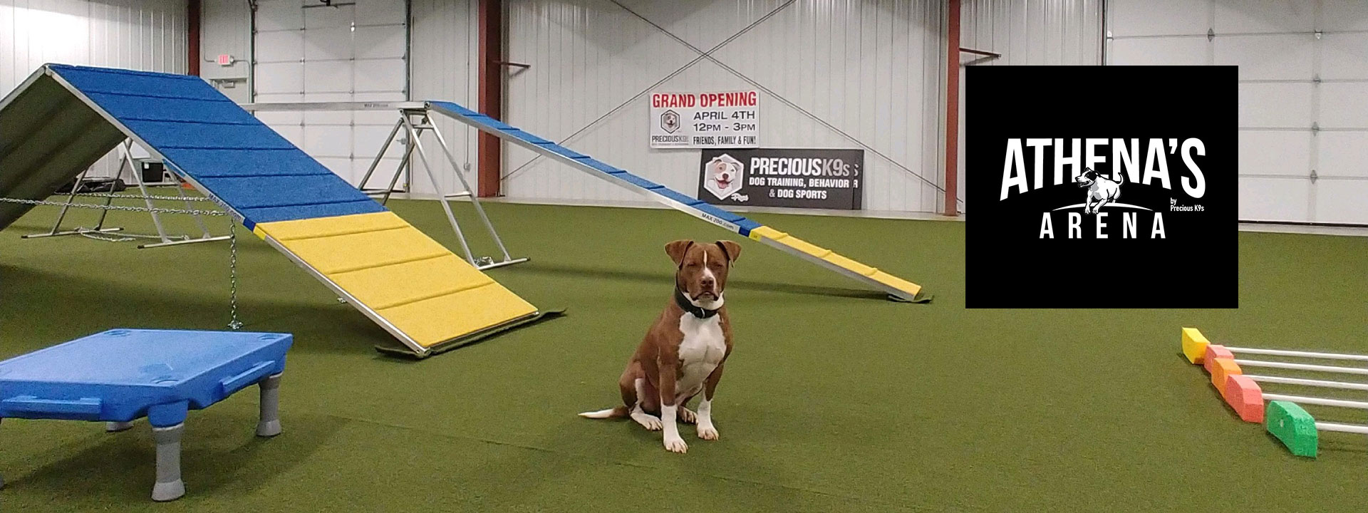 Precious-K9s-dog-training-near-springfield-missouri-mo-4854-South-State-Hwy-ff-arena-7-athenas-arena