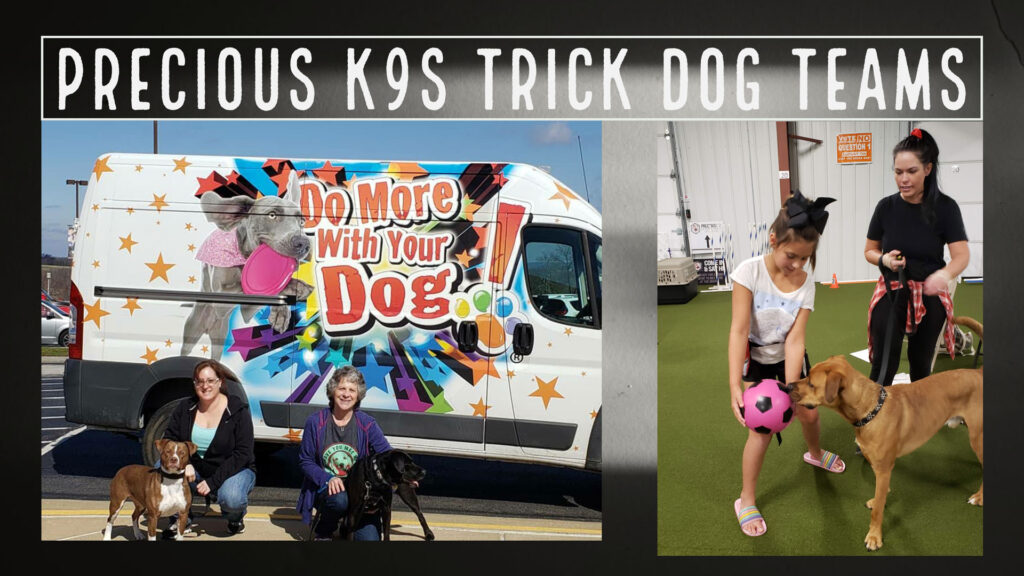 Come join the Precious K9s Trick Dog Teams online!